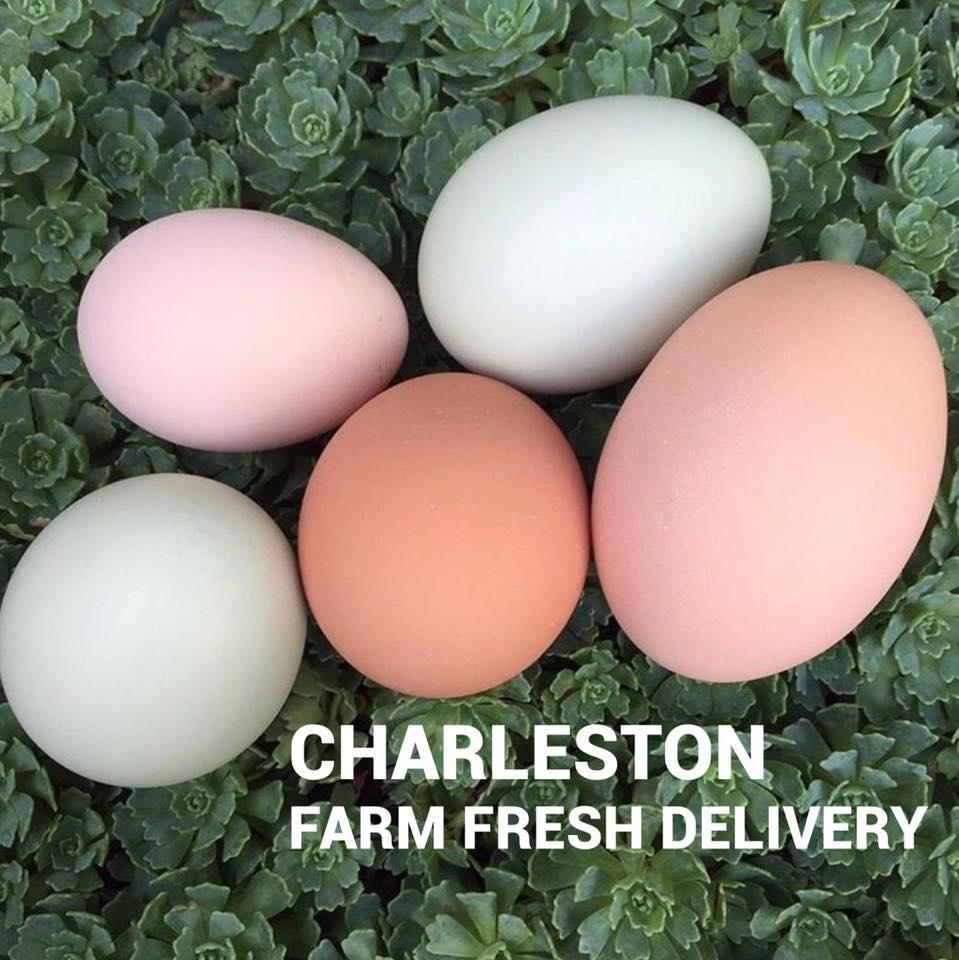 Charleston Farm Fresh